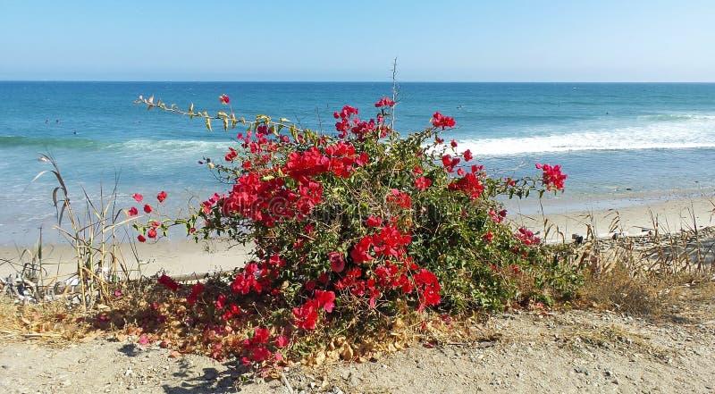 Rote Blumen auf dem Strand stockfotografie