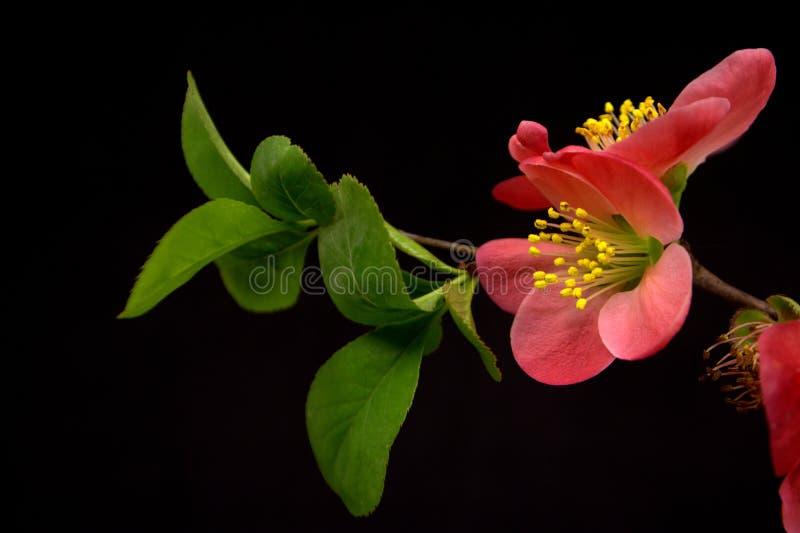 Rote Blumen auf schwarzer Tabelle stockfoto
