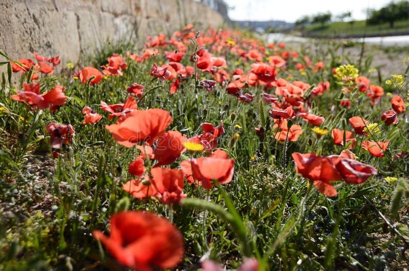 Rote Blumen am Bürgersteig lizenzfreies stockbild