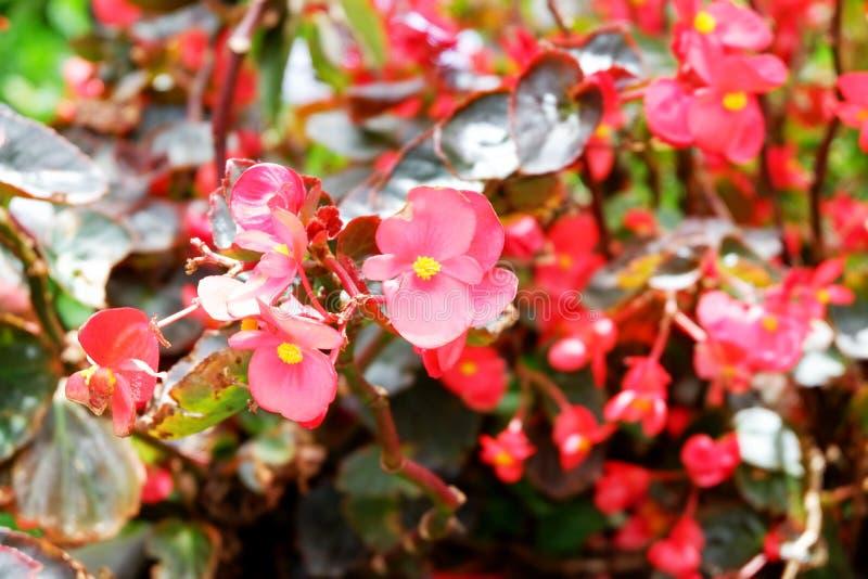 Rote Blumen des Sommers auf Anlage, nahes hohes Archivbild lizenzfreie stockbilder