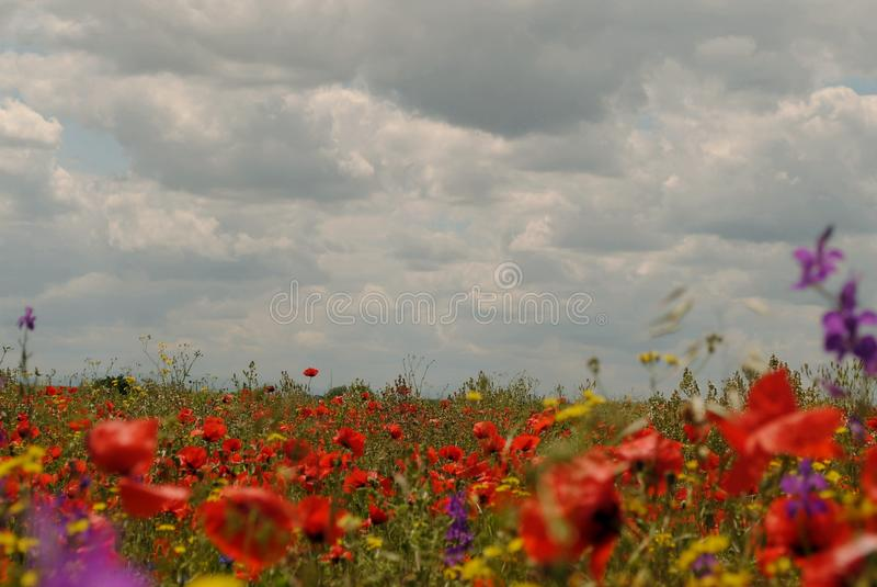 Rote Blumen, grünes Gras lizenzfreie stockbilder