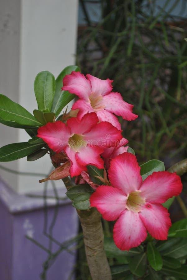 Rote Blumen im Garten stockfotografie