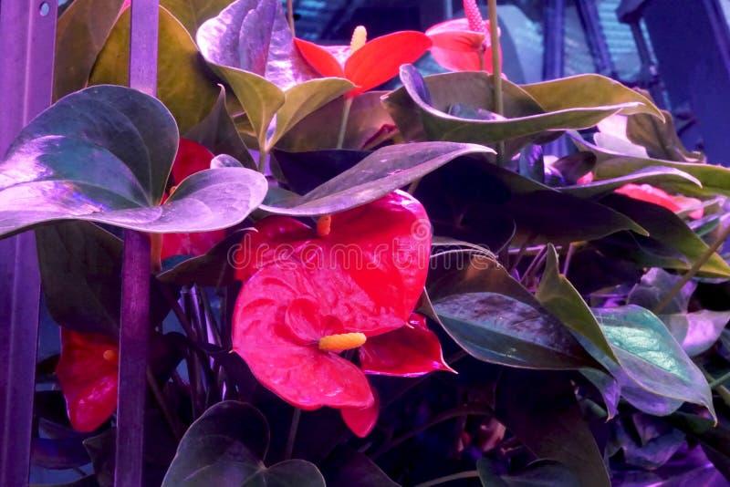 Rote Blumen mit grünen Blättern stockfoto
