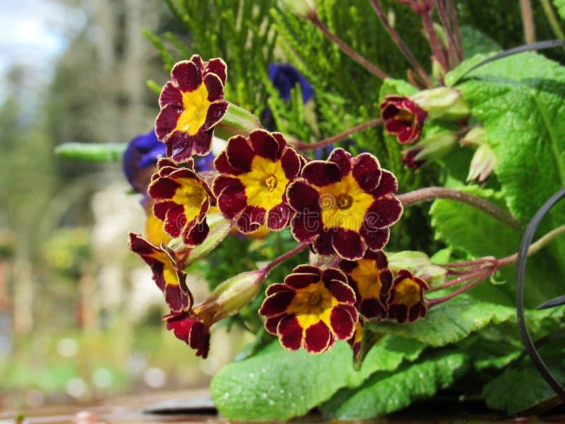 Rote Blumen nach Regen-oben Abschluss lizenzfreie stockbilder