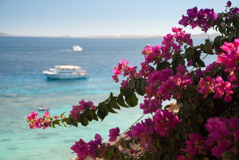 Rote Blumen und blauer Ozean mit weißem Boot lizenzfreies stockbild