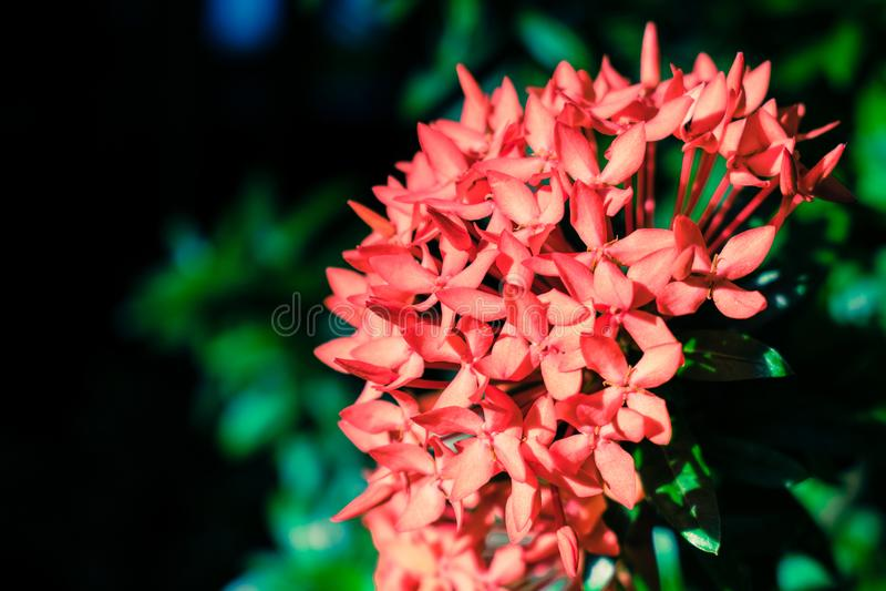 Rote Blumenblätter - Makro stockfotos