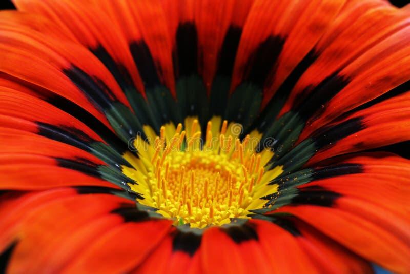 Rote Blumennahaufnahme stockfoto