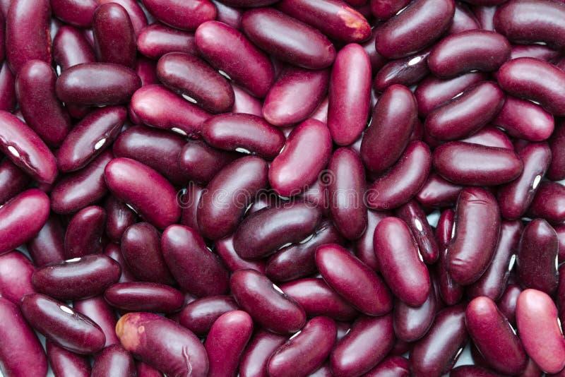 Rote Bohnen der Niere lizenzfreies stockfoto