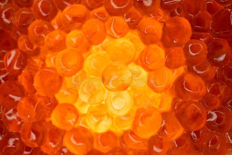 Rote Cavianahaufnahme, glüht vom Innere Oocyte von Lachsfischen lizenzfreie stockfotografie