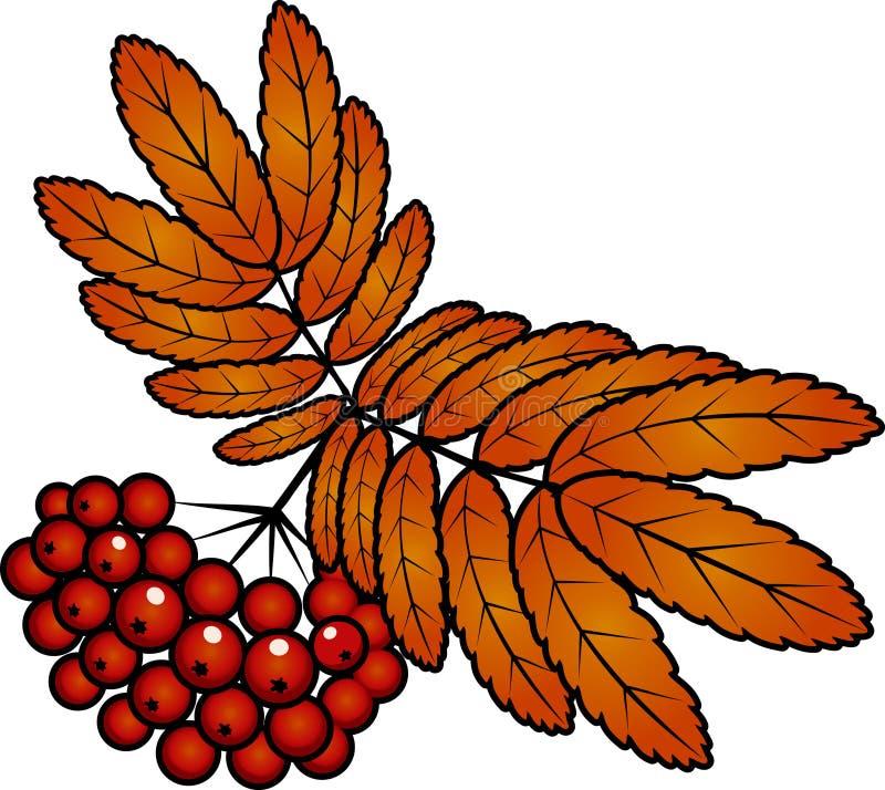 Rote Ebereschebeeren des Herbstes mit Blättern lizenzfreie abbildung
