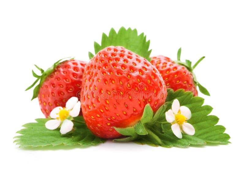 Rote Erdbeerefrüchte mit grünen Blättern stockfotografie