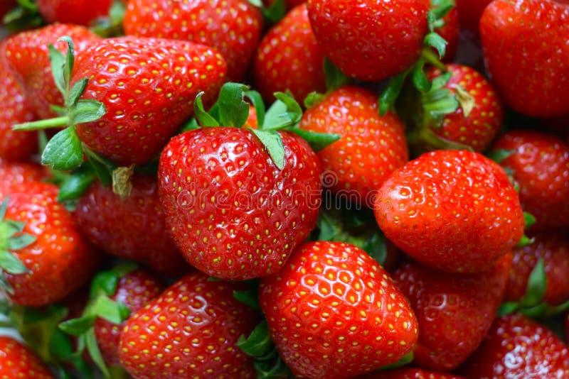 Rote Erdbeeren gesammelt im Garten stockbild