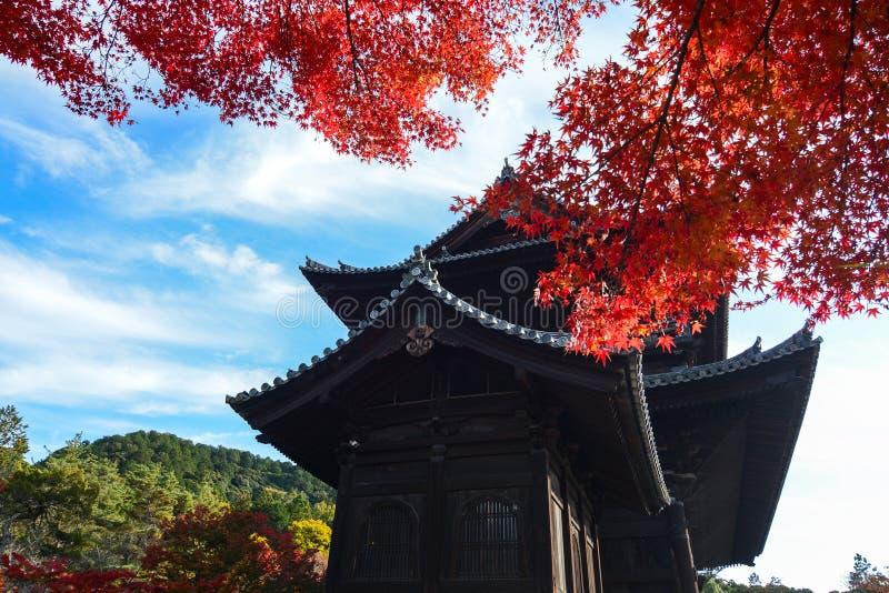 Rote Fallahornblätter glühen mit Farbe vor einem alten japanischen Tempel während des Herbstes lizenzfreie stockfotografie