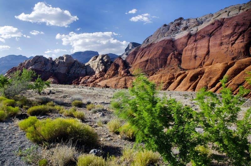 Rote Felsen-Schlucht - nationaler Erhaltungs-Bereich lizenzfreie stockbilder