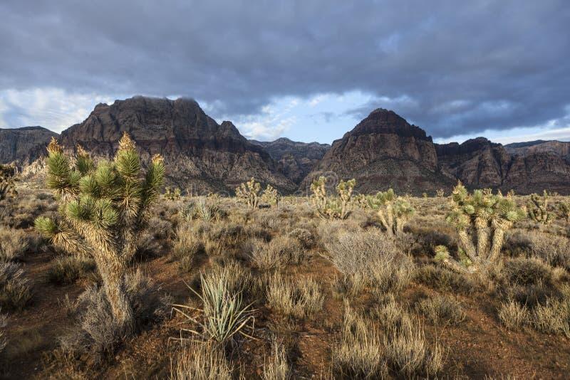Rote Felsen-Schlucht-nationales Naturschutzgebiet - Süd-Nevada USA lizenzfreies stockfoto