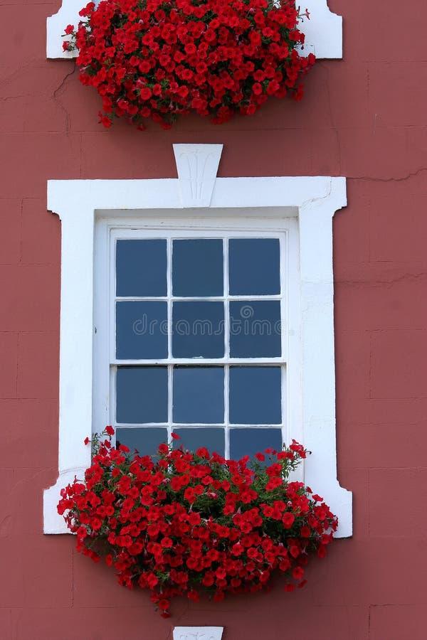 Rote Fenster-Schönheit