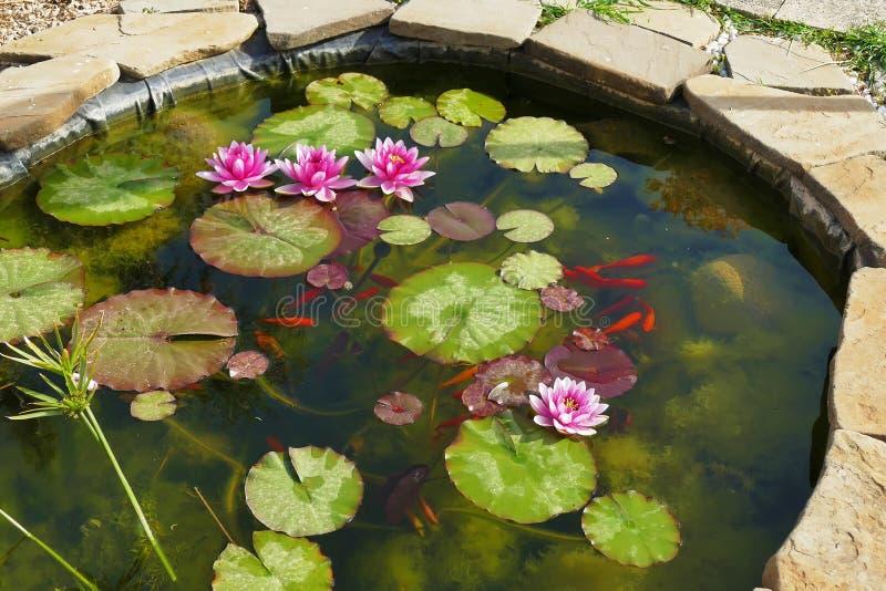 rote Fische im Teich mit Lotos lizenzfreie stockfotos