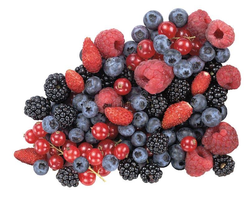 Rote Früchte lizenzfreies stockbild