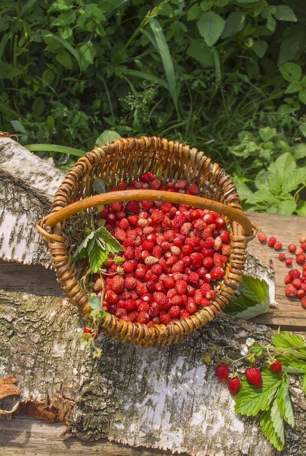 Rote Fragaria oder Walderdbeeren lizenzfreie stockfotos