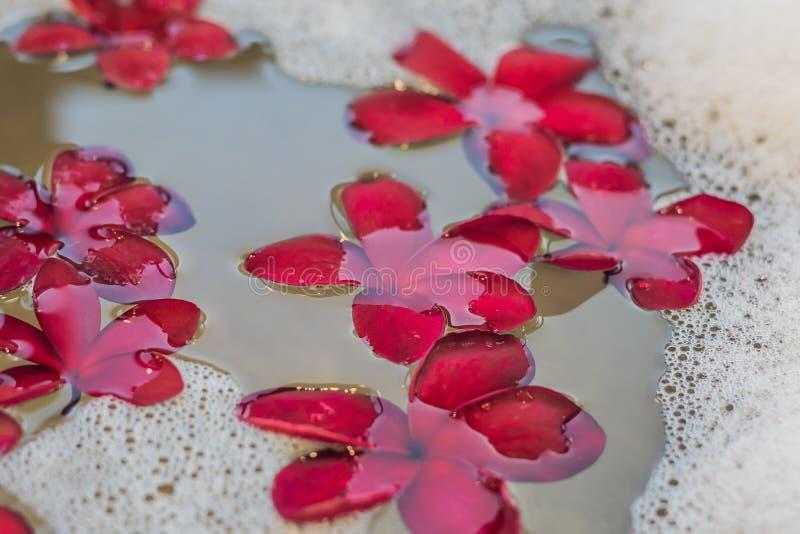 Rote Frangipaniblumen im Whirlpool stockfotos