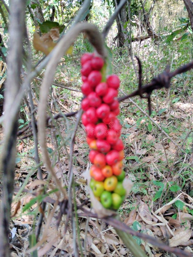 Rote Frucht lizenzfreie stockfotografie