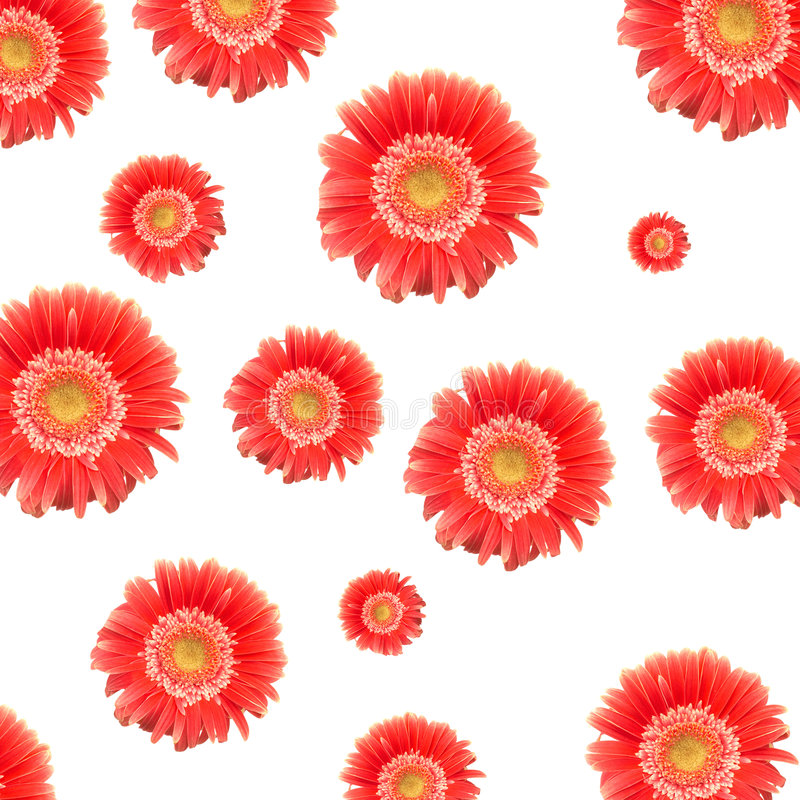Rote Gänseblümchen lizenzfreies stockbild