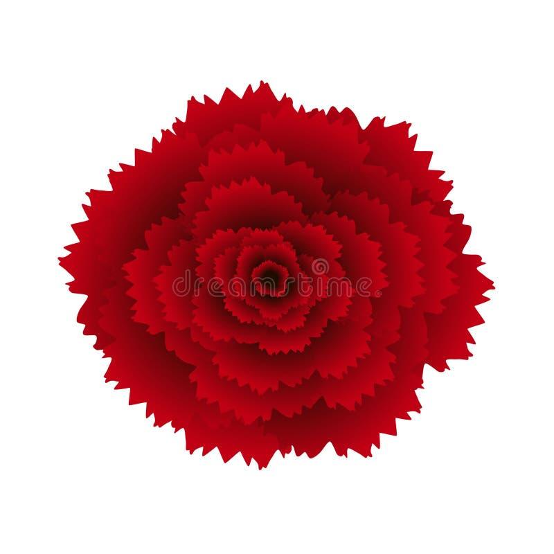 Rote Gartennelke lokalisiert auf weißem Hintergrund lizenzfreie abbildung