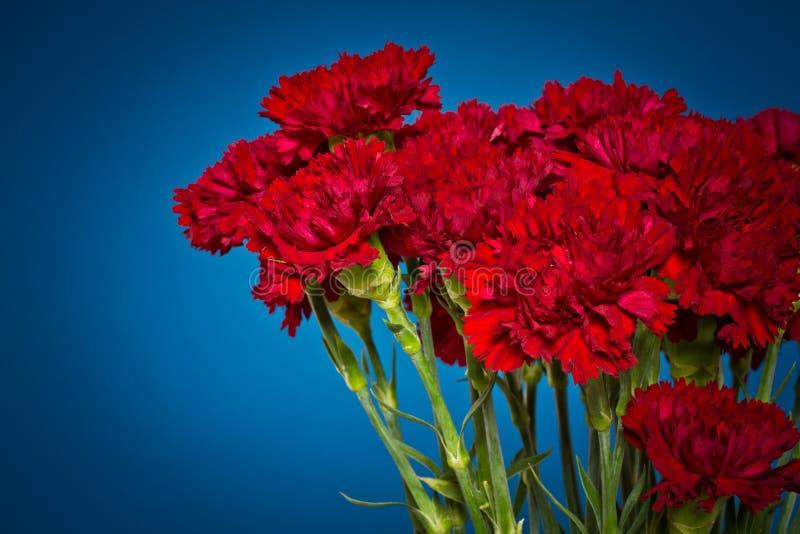 Gartennelkenblumen stockfoto