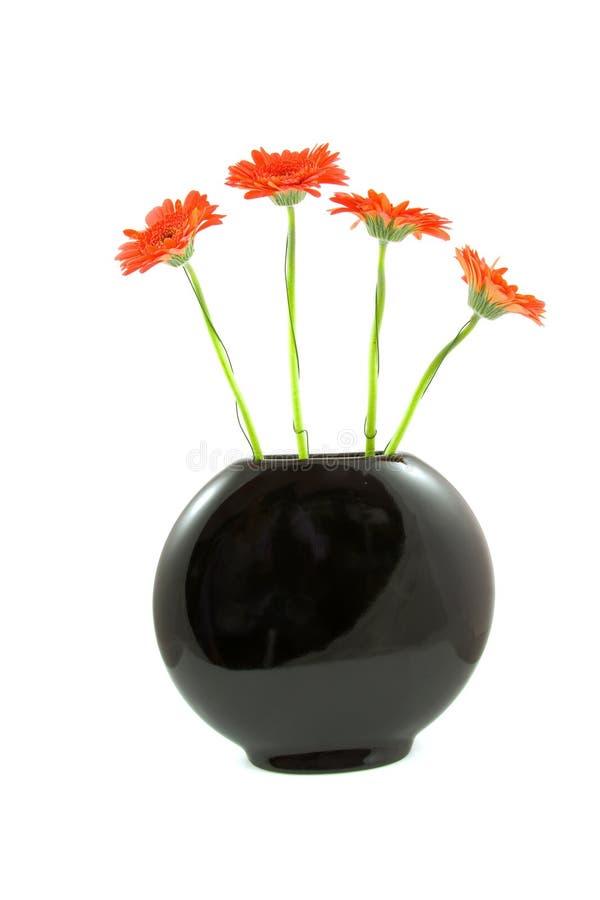 Rote gerber Blumen im balck Vase stockbilder