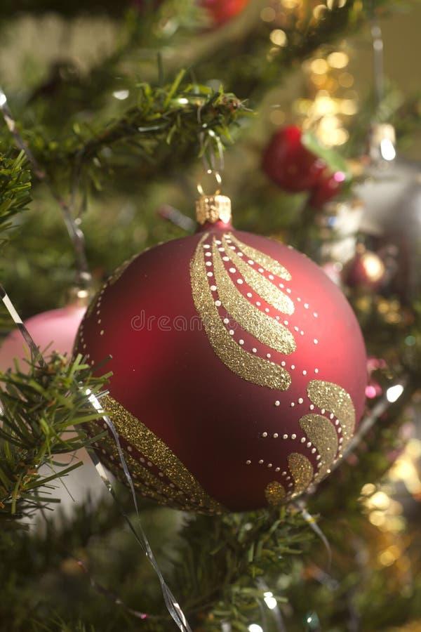 Rote Glaskugel, die am grünen Weihnachtsbaumast hängt lizenzfreie stockbilder