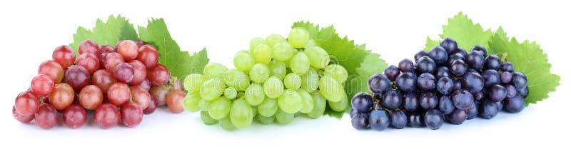 Rote grün-blaue Früchte der Trauben tragen lokalisiert auf Weiß Früchte lizenzfreie stockfotos