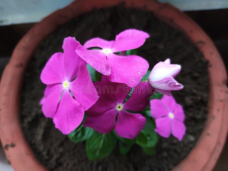 Rote grüne Blumen macht den Tag schöne, entzückende nette Blumen lizenzfreies stockbild