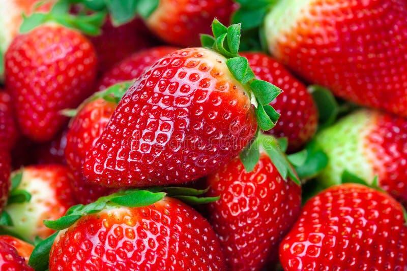 Rote große saftige reife Erdbeeren stockfotografie
