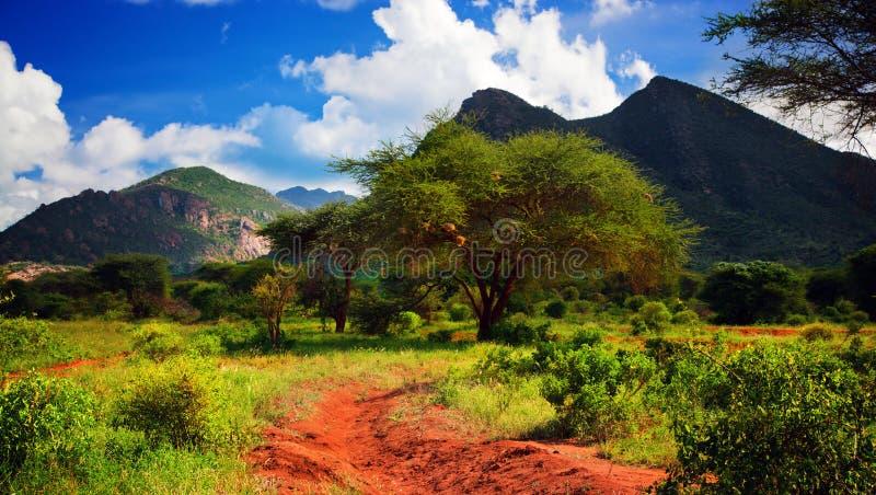 Rote Grundstraße, Busch mit Savanne. Tsavo West, Kenia, Afrika lizenzfreies stockbild