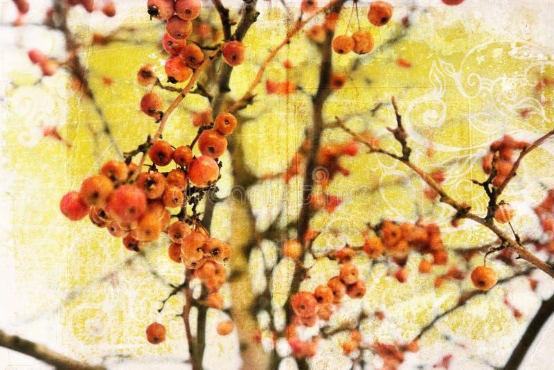 Rote grunge Beeren lizenzfreie stockfotos