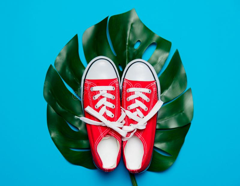 Rote Gummiüberschuhe und grünes Palmblatt stockfotografie