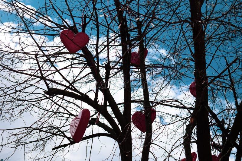 Rote Herzen hängen an einem Baum ohne Blätter gegen den Himmel stockfotografie
