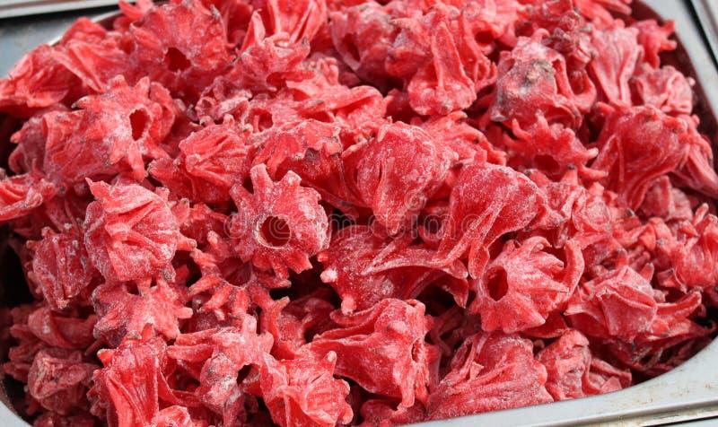 Rote Hibiscusblume entw?sserte lizenzfreie stockbilder