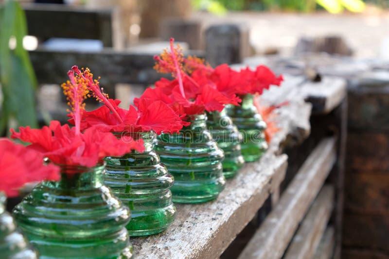Rote Hibiscusblumen in einer schönen Glasflasche stockbild