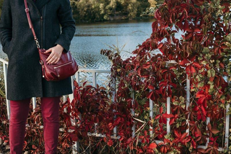 Rote Hose und rote Blätter von Anlagen lizenzfreie stockbilder
