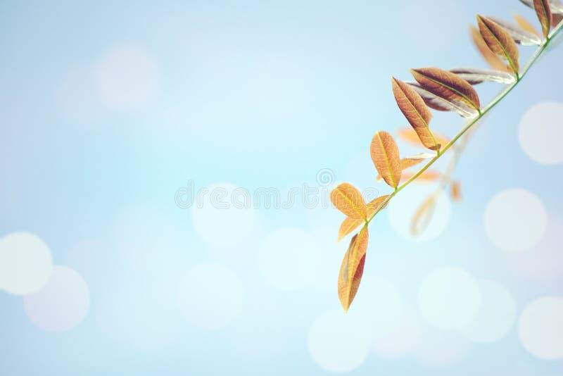 Rote Jahreszeit der Blätter im Frühjahr stockfotografie