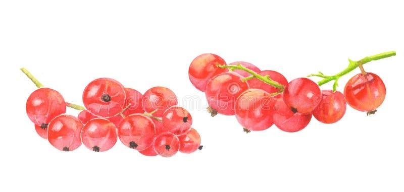 Rote Johannisbeere getrennt auf Weiß lizenzfreie stockfotos
