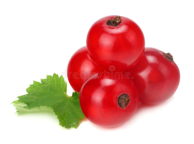 rote Johannisbeere mit dem grünen Blatt lokalisiert auf einem weißen Hintergrund Makro Gesunde Nahrung lizenzfreie stockbilder