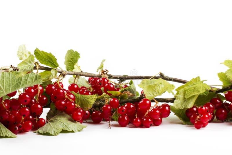 Rote Johannisbeere mit leafes stockbilder