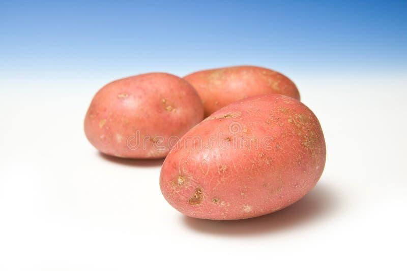 Rote Kartoffeln lizenzfreie stockfotos