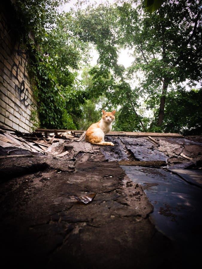Rote Katze auf dem Dach lizenzfreies stockfoto
