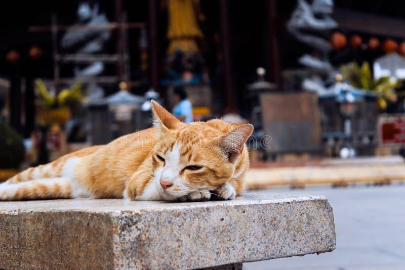 Rote Katze, die auf eine Bank legt lizenzfreies stockfoto