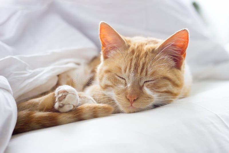 Rote Katze, die auf einer weichen weißen Decke, Nahaufnahme, gemütliches Konzept schläft lizenzfreie stockbilder