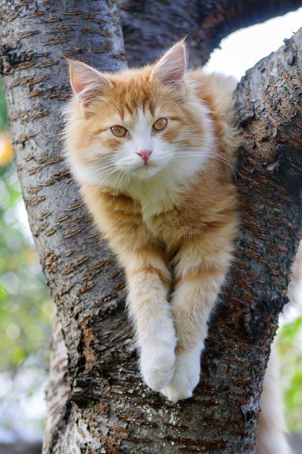 Rote Katze, die in einem Baum sitzt stockbild