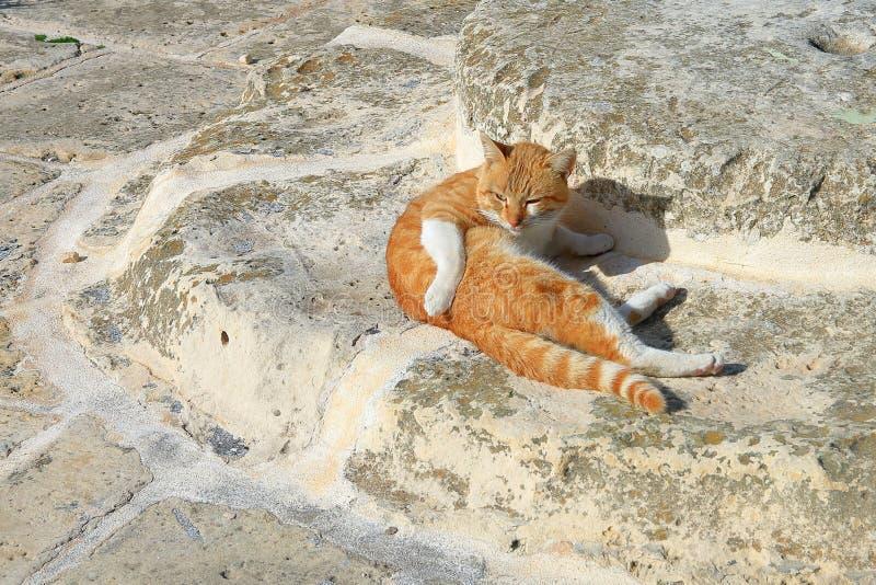 Rote Katze - ein Straßenvagabund stockbild